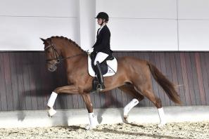 Straight Horse Sir Romance
